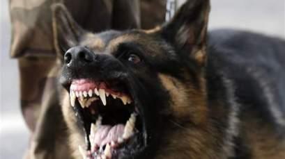 كلب-مسعور